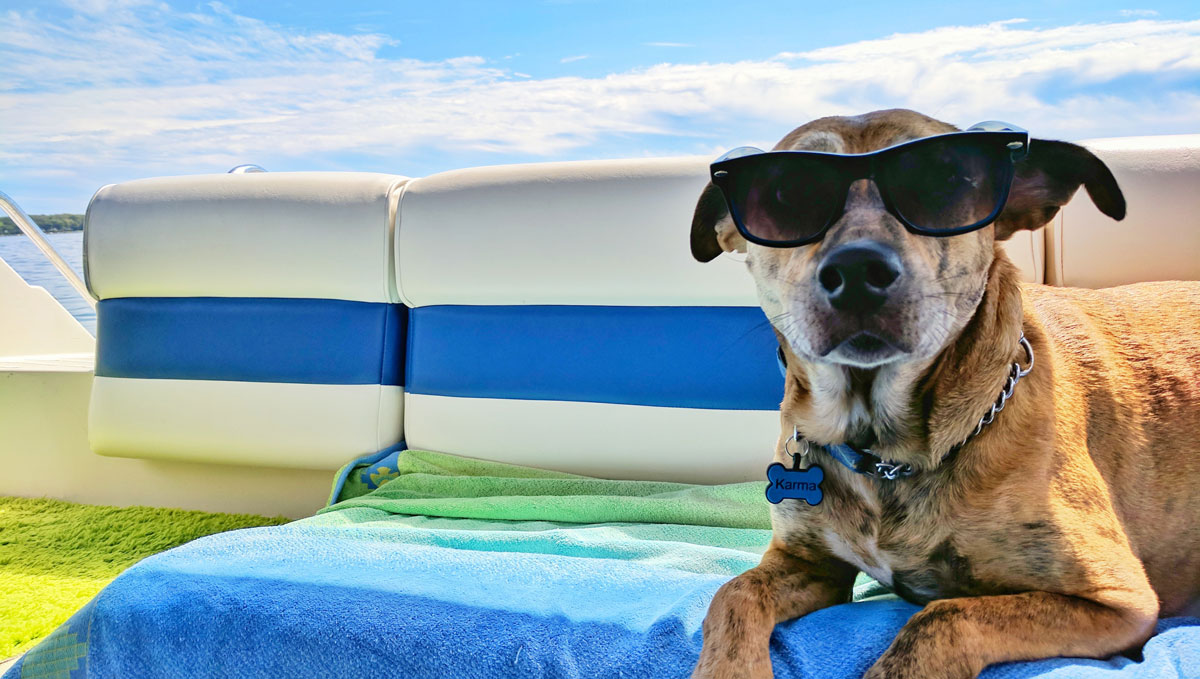 4 Tips for Traveling with Your Pet