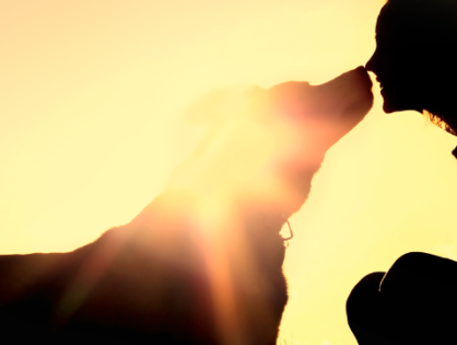 5 Ways to be a Great Pet Owner