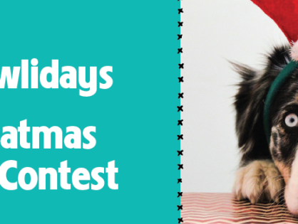 Sit, Stay, Snap – Holiday Pet Photo Contest