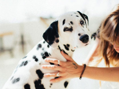 Pet Pain – Why Animals Hide It and What You Can Do to Help