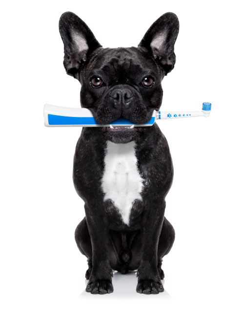 Dog holding a toothbrush
